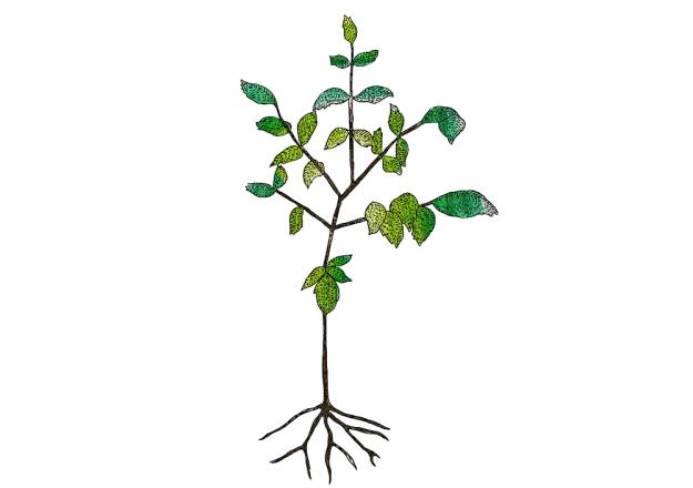 Början på ett träd